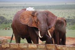 Afrikanischer spalshing Elefant Lizenzfreie Stockbilder
