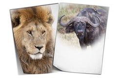 Afrikanischer wildife Hintergrund Lizenzfreies Stockbild