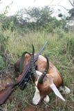Afrikanisches blesbok Antilope der Trophäe mit einem Gewehr nach der Jagd Lizenzfreie Stockfotos