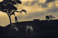 Afrikanisches Jungenschattenbild, das über Viehbestand bei Sonnenuntergang aufpasst Stockfoto