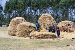 Afrikanisches Landleben und Ackerland Stockbilder