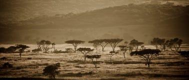 Afrikanisches savanah lizenzfreies stockbild