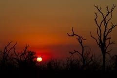 Afrikanisches Sonnenuntergangbaumschattenbild Lizenzfreies Stockbild