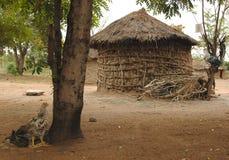 Afrikankoja Royaltyfri Bild