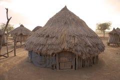 Afrikankoja fotografering för bildbyråer