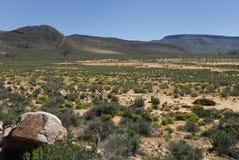 afrikansk ändlös savanna Arkivbilder