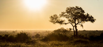 afrikansk bakgrund royaltyfri bild