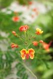Afrikansk blomma Royaltyfria Bilder