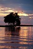 afrikansk botswana solnedgång arkivfoton