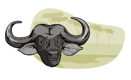 afrikansk buffelsafari Arkivbilder