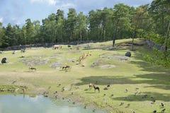 Afrikansk djur utställning på den KolmÃ¥rden zoo Safar Arkivfoton