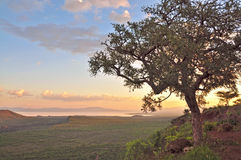 afrikansk drömlik solnedgång Royaltyfri Bild