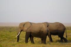 Afrikansk elefantfamilj royaltyfri bild