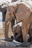 afrikansk elefantwaterhole arkivbild
