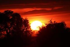 Afrikansk himmel på soluppgång Fotografering för Bildbyråer