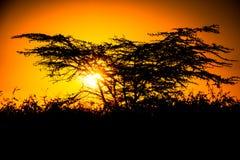 Afrikansk kontur för savannahsolnedgångträd arkivfoton