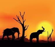 Afrikansk landskapsolnedgång med elefanter Fotografering för Bildbyråer