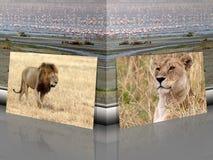 Afrikansk lejon- och lejoninnaPanthera leo med afrikanskt landskap stock illustrationer