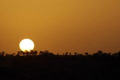 afrikansk liggande över solnedgång Arkivbild