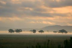 afrikansk mist plattar till soluppgång Arkivbild