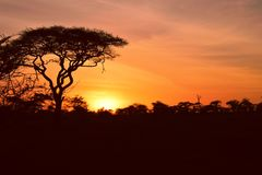 Afrikansk natur på dess bästa! Arkivbilder