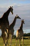 afrikansk plats Royaltyfri Fotografi