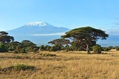 Afrikansk savann i Kenya Royaltyfri Foto