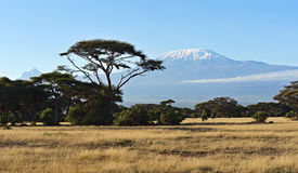 Afrikansk savann i Kenya Arkivbild