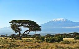 Afrikansk savann i Kenya Royaltyfri Fotografi
