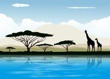 afrikansk savanna Arkivbilder