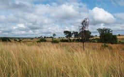 afrikansk savanna arkivfoton