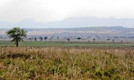 afrikansk savanna arkivbild