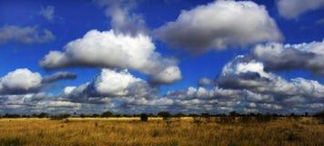 Afrikansk savanna Royaltyfria Foton