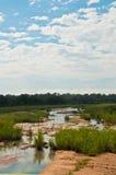 afrikansk savannah Arkivfoto