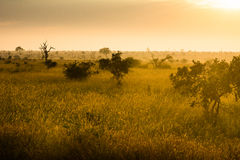 Afrikansk savannah på soluppgång arkivbild