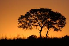 afrikansk silhouettesolnedgångtree Arkivbilder