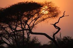afrikansk skymning Fotografering för Bildbyråer