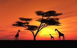 afrikansk solnedgång Fotografering för Bildbyråer