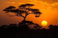 Afrikansk solnedgång Royaltyfri Fotografi