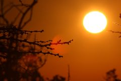 afrikansk soluppgång Arkivfoto