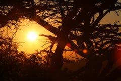 afrikansk soluppgång Arkivbild