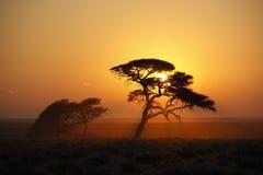 Afrikansk soluppgång - Namibia Arkivbilder