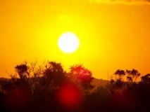 afrikansk sommarsolnedgång Arkivfoton