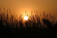 afrikansk sun Arkivfoton