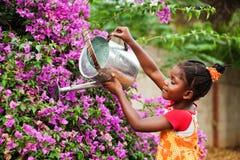 afrikansk trädgårdsmästare Arkivbild