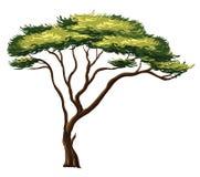 Afrikansk tree Arkivfoton