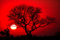 afrikansk tree arkivbilder