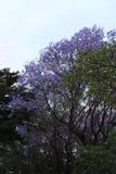 afrikansk tree arkivbild
