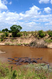 Afrikansk vildmarkliggande Arkivfoton