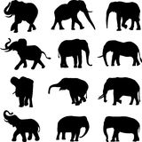 afrikanska asiatiska elefanter Arkivbild